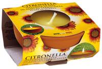 Citronella In Terracotta Cm.7,5