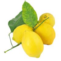 Limoni Foglia