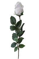 Bocciolo 1 Fiore Bianco