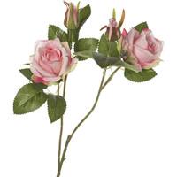 Rosa A Ramo Rosa