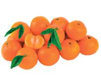 Clementine Foglia