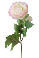 Ranuncolo Rosa