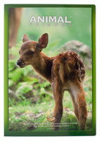 Quaderno Maxi Animali 4 mm Con Margine - Grammatura 100