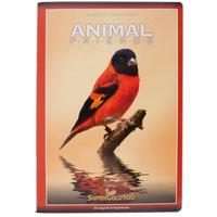 Quaderno Maxi Animali 1 Rigo - Grammatura 100