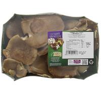 Funghi Pleurotus Cardoncello